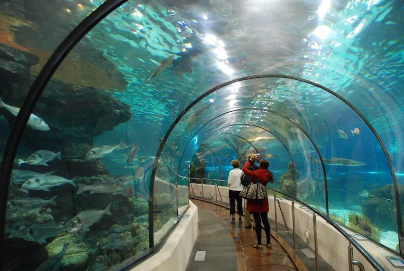 Аквариум Барселоны - Barcelona Aquarium