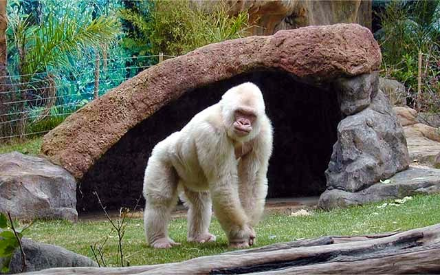 Зоопарк Барселоны - Barcelona Zoo
