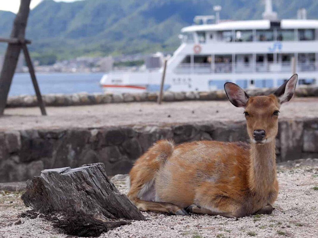 Остров Миядзима в Японии